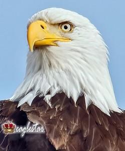 eaglestar apostolic